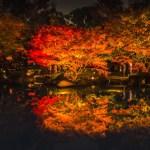 大田黒公園『紅葉ライトアップ』