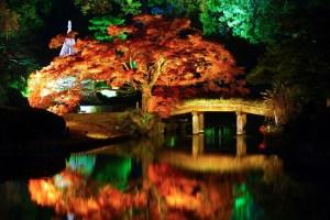 六義園『紅葉と大名庭園のライトアップ』