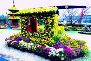 仙巌園『菊まつり』