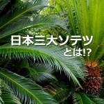 日本三大ソテツ