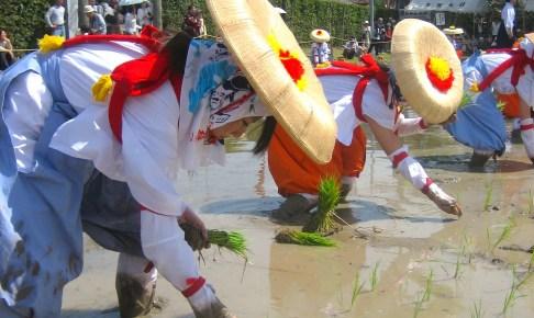 多賀大社『御田植祭』