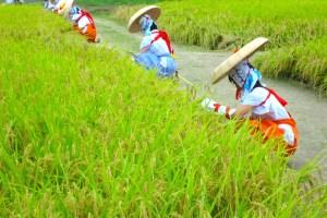 多賀大社『抜穂祭』