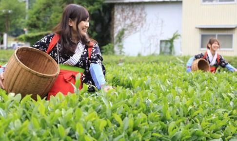 大国寺と丹波茶まつり