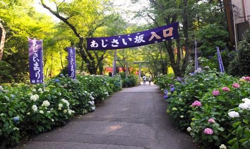 とちぎあじさいまつり 栃木市