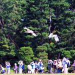 【知られざるニッポン】vol.40 日本一のタンチョウ飼育県、岡山