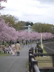 思川桜まつり