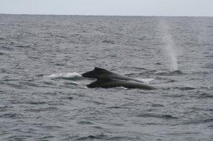銚子海洋研究所ホエールウォッチング