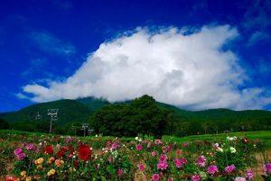 旬花咲く黒姫高原