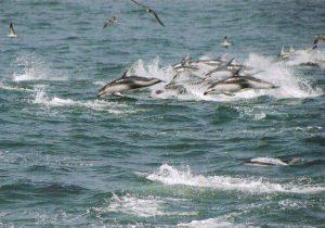 イルカ・クジラウォッチング