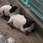 島根県畜産技術センター ふれあい動物広場
