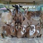 阿佐動物公園