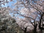 盛岡城跡公園