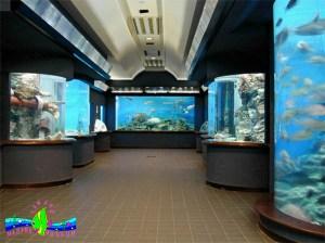 市立玉野海洋博物館 渋川マリン水族館