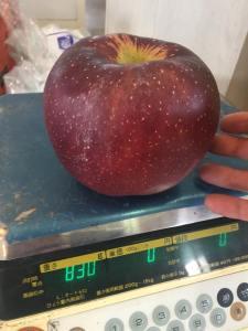 果実庭&桑原アップル
