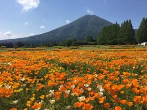 生駒高原ポピー畑