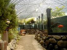 匠の館 森の水族館