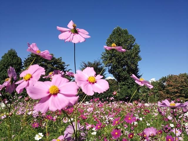 ハーブ庭園旅日記 勝沼庭園