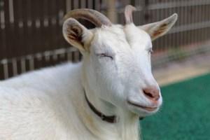 石川県動物ふれあい
