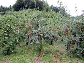 沼の上りんご園