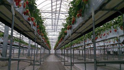ふるさと農園美の関