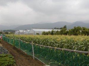 秦野いとう農園