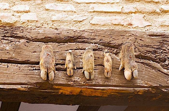 イノシシの足の魔除け画像