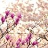 寒暖の差の激しい春を健康的に乗り切るために…
