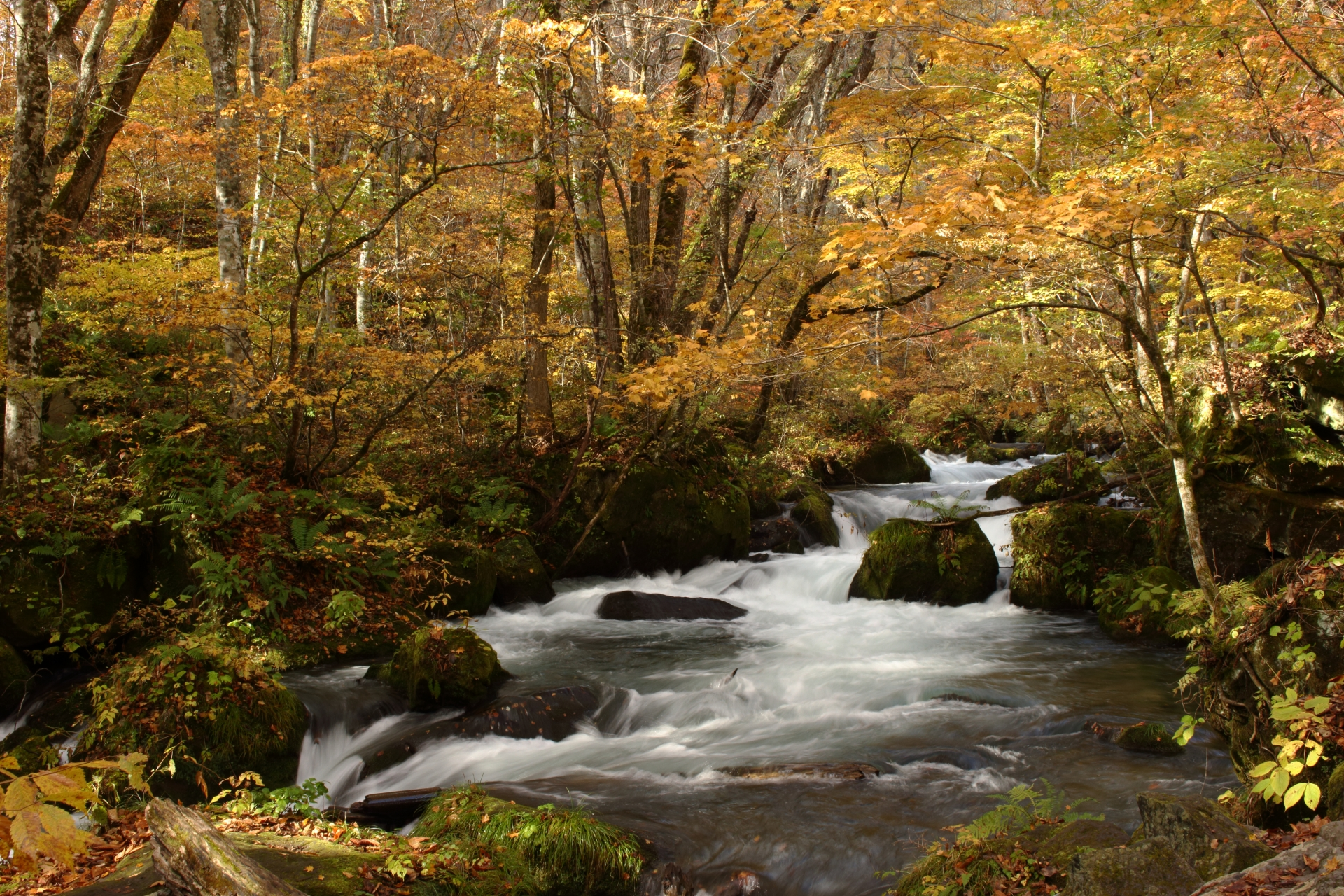 奥入瀬渓流 阿修羅の流れ 紅葉