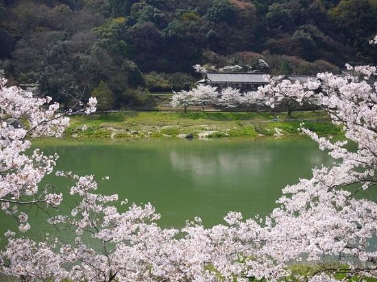 20150216-285-50-kyoto-Cherry-blossoms