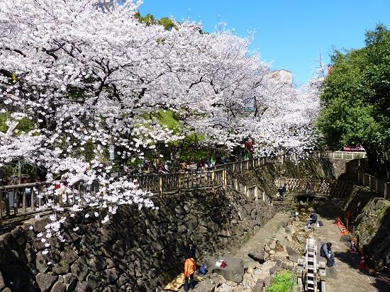 20150220-289-12-tokyo-Cherry-blossoms