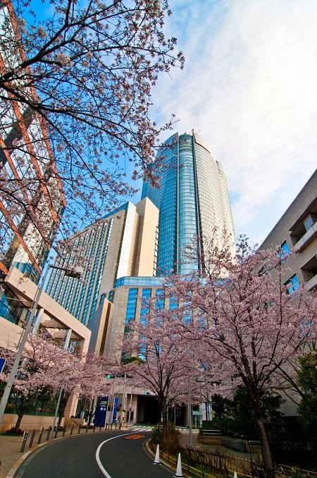 20150220-289-24-tokyo-Cherry-blossoms