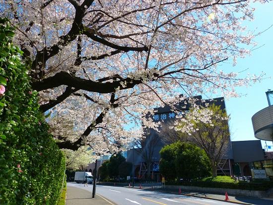 20150220-289-7-tokyo-Cherry-blossoms