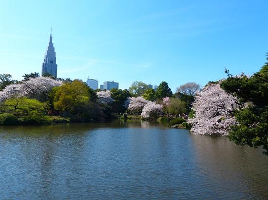 20150220-289-8-tokyo-Cherry-blossoms