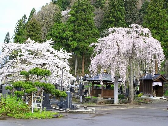20160429-693-12-kakunodate-kanko