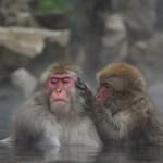 サル 動物 温泉 お風呂