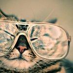 メガネ ねこ 動物 雑貨 ファッション ショップ