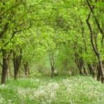 公園 庭園 自然 風景