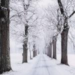 風景 自然 寒い