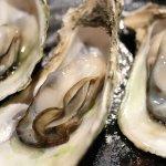 牡蠣 海鮮 食事 和食