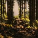 山道 自然 風景