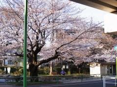 201104tokyohanami09