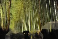 京都嵐山 La bambouseraie illuminée