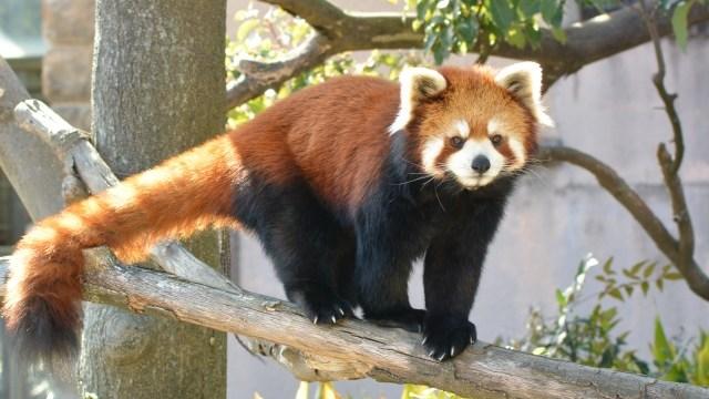 2017千葉市動物公園GW混雑状況レポ!駐車場とバーベキュー情報も