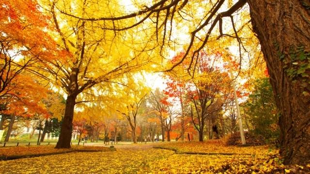 秋の体のだるさ…それって秋バテ?原因と解消法をご紹介!