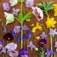 植えっぱなしでよく増える球根と増やし方のコツ。お金をかけずに時間をかけてお庭を花でいっぱいに!
