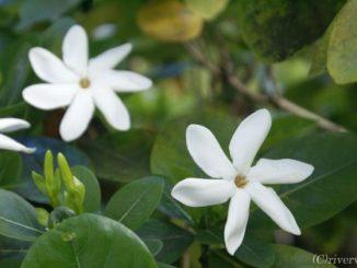 タヒチ パペーテ Tahiti Papeete