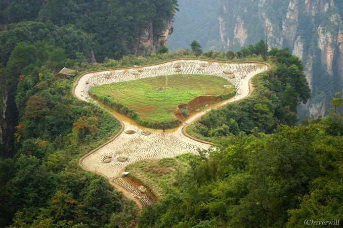 武陵源 張家界 空中田園 Wulingyuan Air Garden