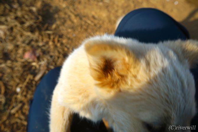 羅平 雲南省 パピー Luoping Yunnan Puppy