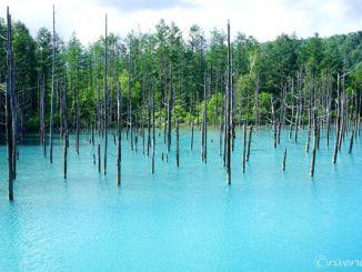 北海道 美瑛 青い池 Hokkaido Biei Oai-Ike