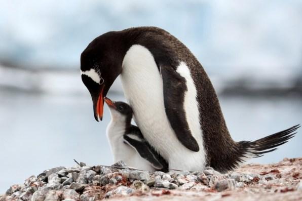 ゼンツーペンギン